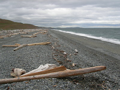 [IMAGE] beached driftwood