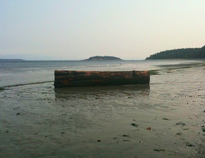 [IMAGE] beached log