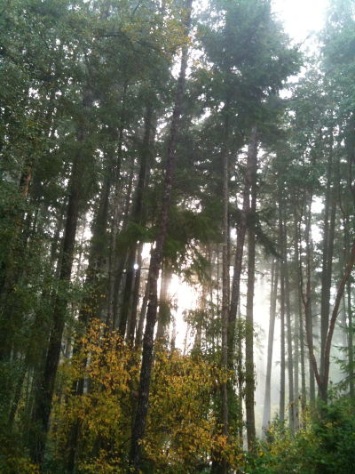[IMAGE] foggy woods