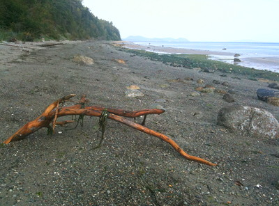[IMAGE] beached branch