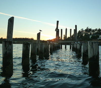 [IMAGE] gulls on old pilings