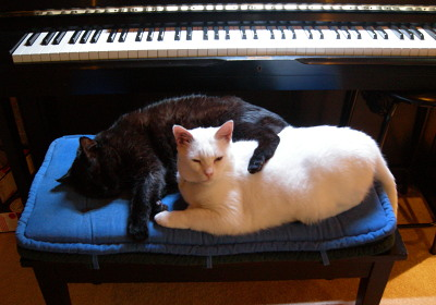 [IMAGE] piano cats