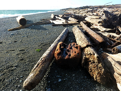 [IMAGE] driftwood on South Beach